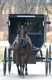 Man Charged In Amish Buggy Drive-By Shooting